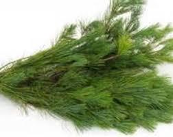 12 Fresh Cut White Pine Boughs, Branches, Christmas Greenery!wreaths