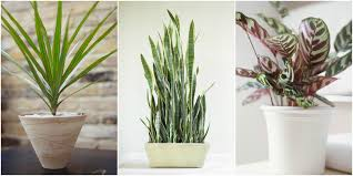 Low Light Houseplants Plants That Don T Require Much Gallery ...