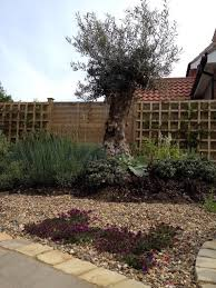 Small Picture Garden Design and build service The Norfolk Olive Tree Company