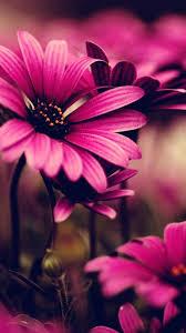 flowers iphone wallpaper
