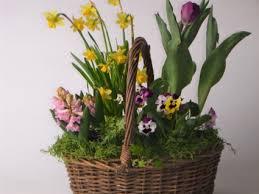 spring bulb garden plant basket in