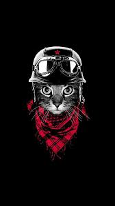 badass cat wallpaper. Brilliant Badass Wallpaper IPhone Cat For Badass Cat Wallpaper B