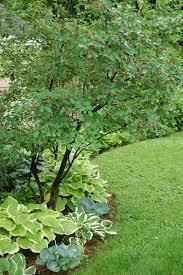 Country Gardener No Bare Soil The Secret Is UnderplantingUnderplanting Fruit Trees