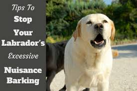 how to stop a dog from excessive nuisance barking