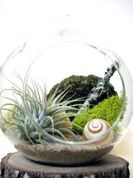 hanging air plant terrarium kit everything in sea and asters is lovely spiral air plant terrarium by diy hanging air plant terrarium kit