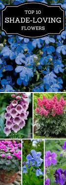 Top 10 Beautiful Shade - Loving Flowers