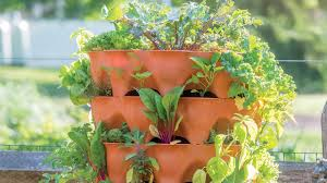 Companion Planting Guide Growing Tips And Advice Articles