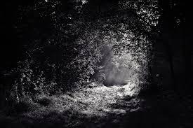 Image result for darks woods