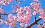 Открытки природа цветы