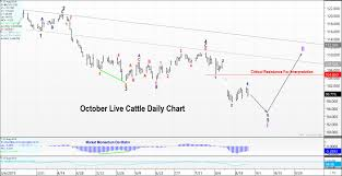 October Live Cattle Futures Trilateral Perspectives You