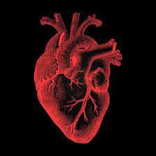 Anatomical heart art, Human heart art ...