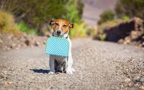 Bildresultat för pass hund bilder