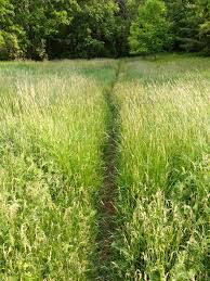 Image result for path on grass