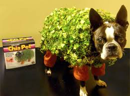 chia pet costume for a dog