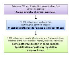 amino acids evolution learn science