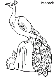 Small Picture Peacock Coloring Pages GetColoringPagescom