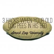 dog incontinence bed.  Incontinence Incontinence Dog Pees Old To Dog Incontinence Bed Smart University