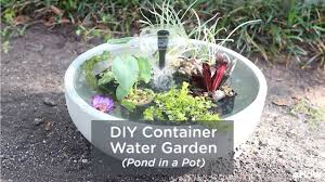 diy container water garden pond in a pot
