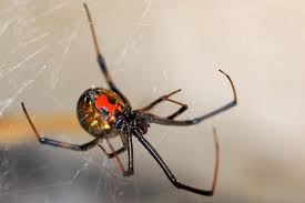 True Facts About The Worlds Most Fear Inducing Spider