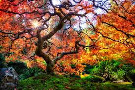 famous japanese garden tree in portland by michael