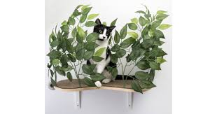canopy cat wall shelves with leaves