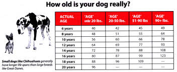 Dog Age Chart By Weight New More Accurate Dog Age Chart From Tufts University
