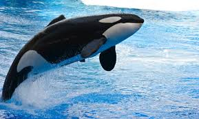 Image result for whale species