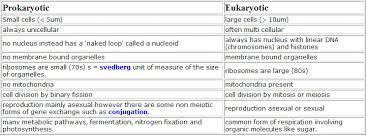 Prokaryotic And Eukaryotic Cells Chart Differences Between Prokaryotic And Eukaryotic Cell