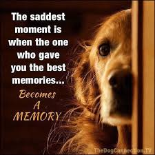 Quotes About Dogs And Friendship Extraordinary The Saddest Moment Is When The One Who Gave You The Best Memories