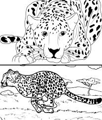 Cheetah coloring pages will appeal to boys and girls who love rare animals. Cheetah Coloring Pages Draw Templates And Images To Print
