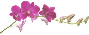 """Résultat de recherche d'images pour """"gifs d'orchidée"""""""