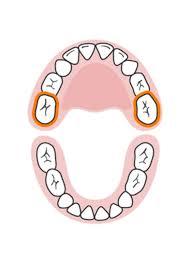 Baby Teething Timeline Parenting Baby Teeth Order Baby