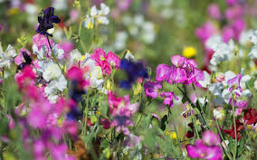 Small Picture Top 10 plants for a modern cottage garden David Domoney