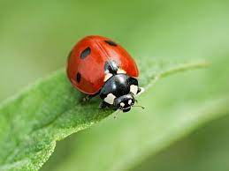 good bug bad bug how can you tell the