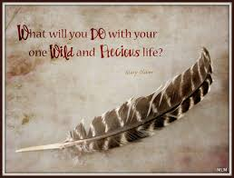 Life Is Precious Quotes Enchanting Hidden Passages Your One Wild And Precious LIfe