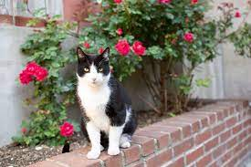 keep cats out of your yard or garden