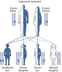 Patterns Of Inheritance Best Autosomal Recessive Inheritance Principles Patterns Disorders