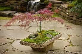 moss dish gardens
