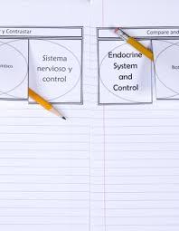 Central Nervous System Vs Peripheral Nervous System Venn Diagram Endocrine And Nervous Systems Venn Diagram Dinah