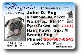Drivers Virginia Drivers Virginia License