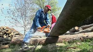 Image result for men chainsawing logs