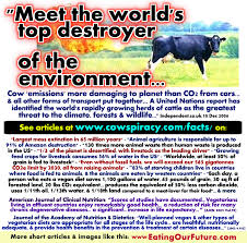 placement of thesis statement in essay heart of darkness ap essay most people involved in the beef industry are aware of the new york times essay contest