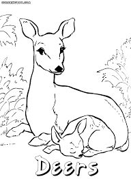 Small Picture Baby Deer Coloring Pages Coloring Coloring Pages