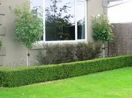 Small Picture Garden Design Ideas With Hedges Sixprit Decorps
