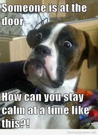 Funny Dog Quotes Interesting Funny Dog Quotes