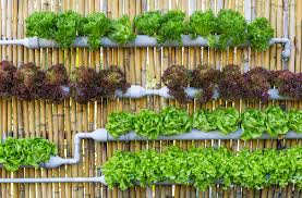 as we tackle the global climate crisis and struggle with the ramifications of a growing population urban gardening is a great way to act individually on
