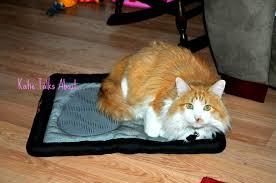 petsmart animals for sale. Modren Petsmart Does Petsmart Sell Cats Intended Animals For Sale A