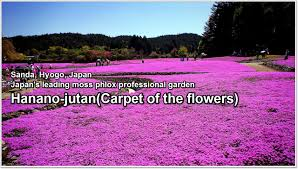 carpet of flowers mtg. previous next carpet of flowers mtg