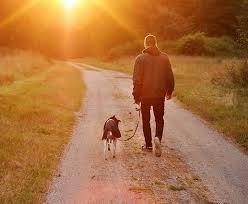 Resultado de imagen de paseo perro