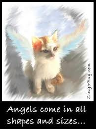 Kitty Angel Glitter Graphic Comment | Angel cat, Cats, Great cat